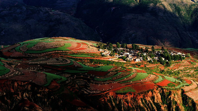 Chinese rice landscape