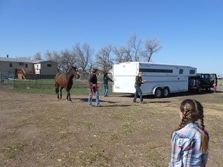 Moving North Star Horsemenship Day 2- Unloading Trip 1 (2)