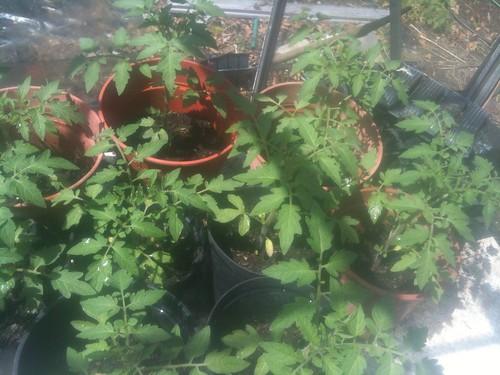 Gardening by Scrumbledelicious