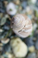 clam(0.0), fauna(0.0), food(0.0), escargot(0.0), animal(1.0), snail(1.0), invertebrate(1.0), macro photography(1.0), seashell(1.0), close-up(1.0),