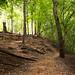 La Nana Creek Trail 3