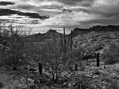 The view from today's ride. Some b/w work today. #CoffeeKen #arizonasky #arizonaisgorgeous #divine_deserts #vzco_of_our_world #adventuretoanywhere #beon12