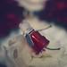 Bloody Red Hood by Art_emis
