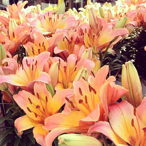 Day124 Beautiful Flowers at Lowes 5.4.13 #jessie365