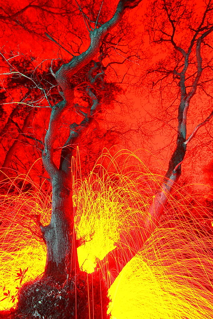 Wacky Weirdo in Wild Woods Whirling Wads of Wire Wool