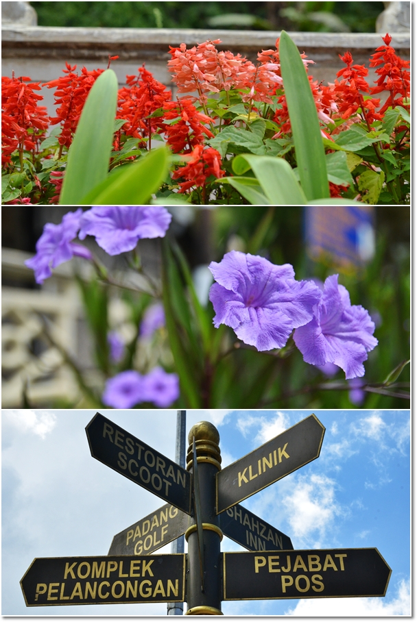 Signboards  Flowers