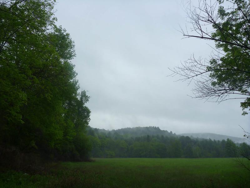 Phoebe's Field