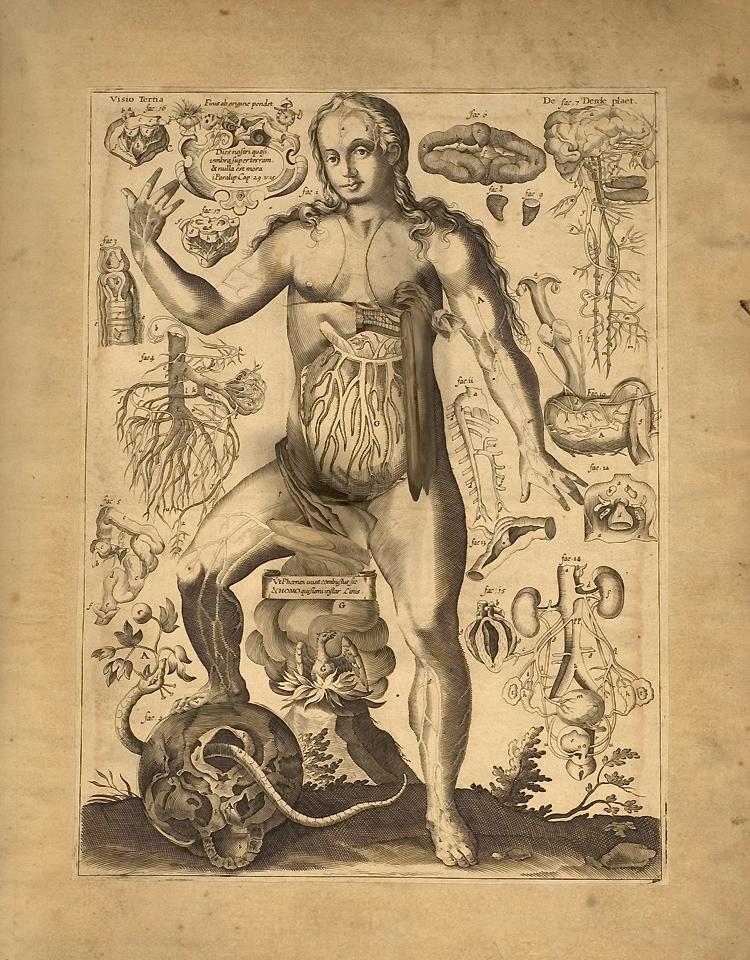 Remmelin\'s Anatomical \'Flap\' Book (1667) – The Public Domain Review