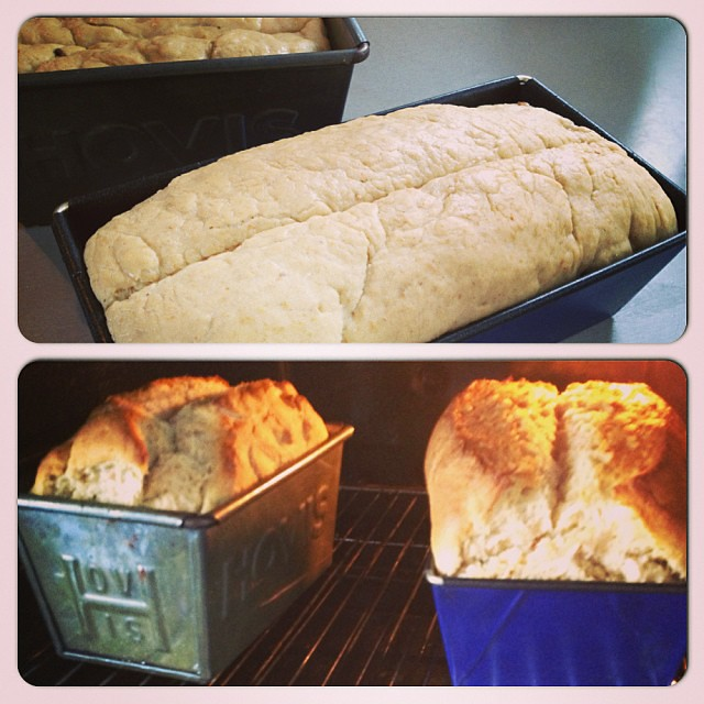 Whoa, sour dough malted bread batch 3 really rose up! Kneading dough is kinda like kneading clay...