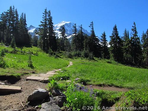 An early view of Mt. Rainier in Spray Park, Mt. Rainer National Park, Washington