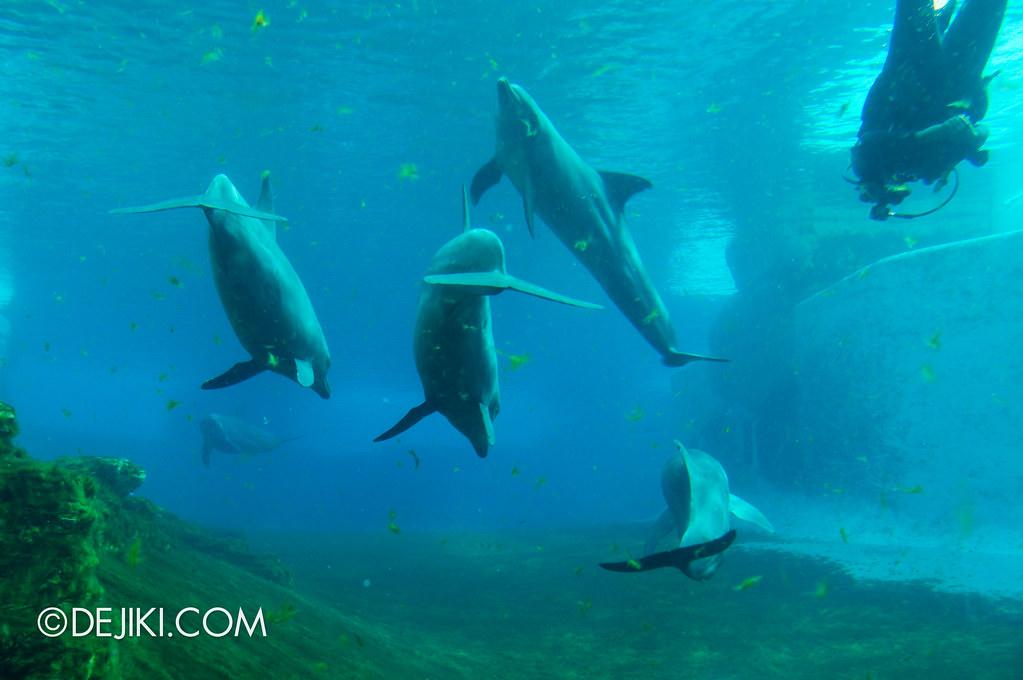 Marine Life Park Singapore - S.E.A. Aquarium - Dolphins