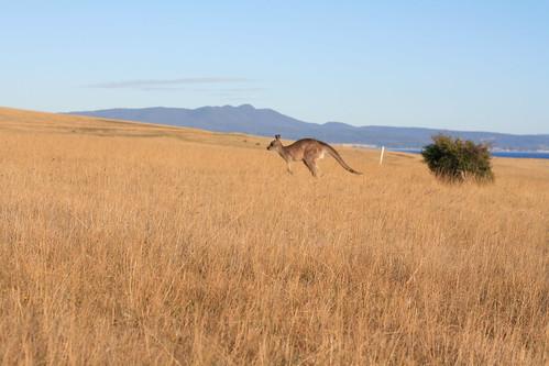 Tasmania18