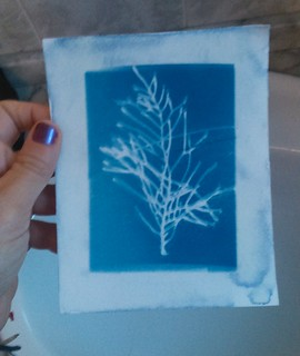 5. Cyanotypes - Making of (5)