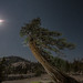 Tree of trees D75_7724 by captured by bond