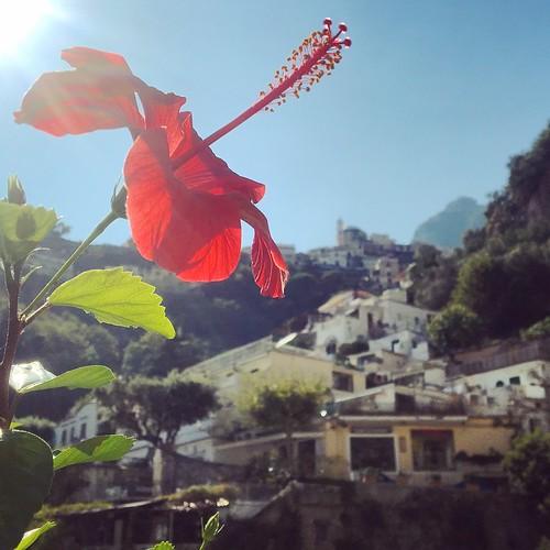 Hibiscus in Positano