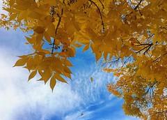 Autumn marquee… 🍁🍂 #fall