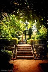 Steps & Irrigation