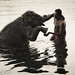 Elephant Caretaker by Jacob Jonson