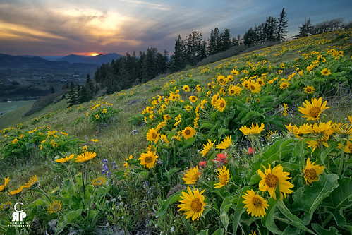 Hood River Balsam Sunset