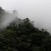 Forest in the fog - bosque en la neblina; camino entre San Pedro Ocotepec y San Lucas Camotlán, Región Mixes, Oaxaca, Mexico por Lon&Queta