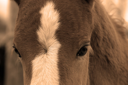 Foal of Thoughts