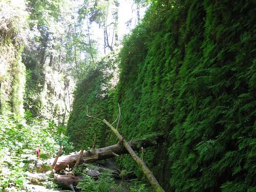 Fern Canyon 11