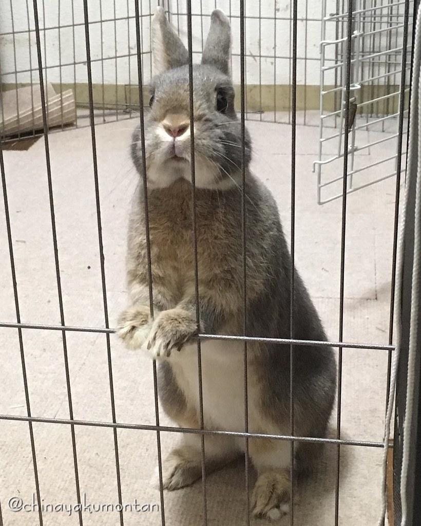 #うさぎ #うさぎのもんたん #rabbit #bunny #もふもふ #ペット #pet #love #cute #fluffy #instagood #followme #kawaii #daily #lapin #ふわもこ部 #動物 #instabunny #coniglio #petphotography #animallovers #kaninchen #cuniculus #conejo #ピーターラビット #立った #おねだり #scrounger #あざとい #peterrabbit