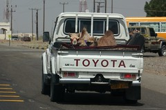 Camel travel