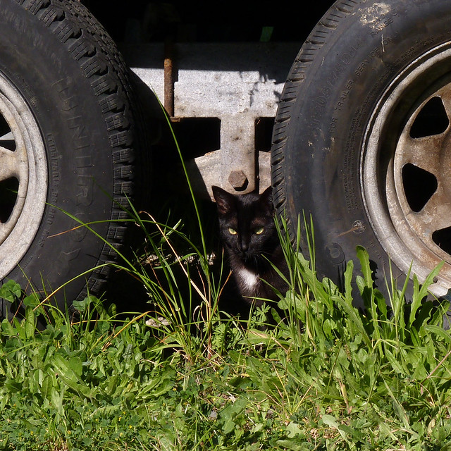 Noodle Between Tires