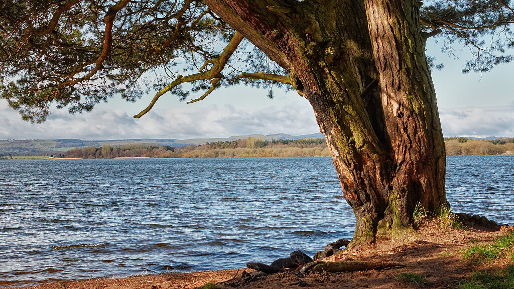 A journey into colour: Tree on Loch Leven