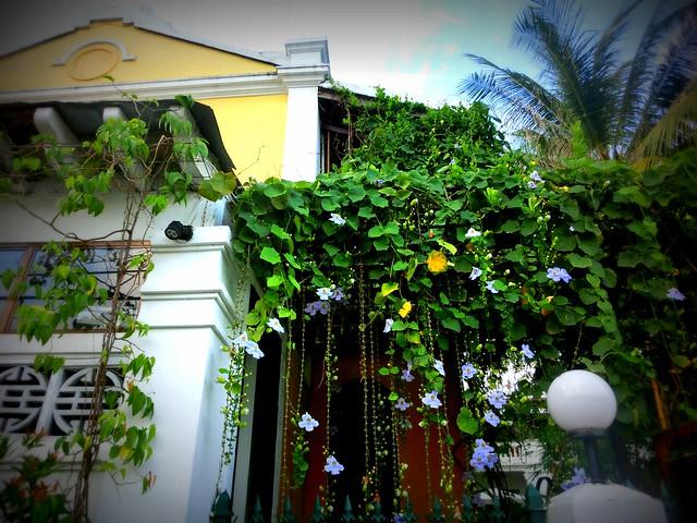 Lush vegetation on the streets of Hoi An, Vietnam