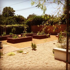 Sustainable urban garden #edibles #sustainable #veggies #raisedbeds #dripirrigationsystem #peagravel #gardens#alfordsgardens