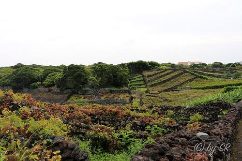 Azores2014_0566
