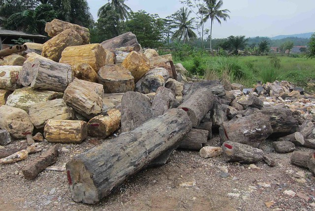 Landscaping With Wood Logs : Petrified wood landscaping logs flickr photo sharing