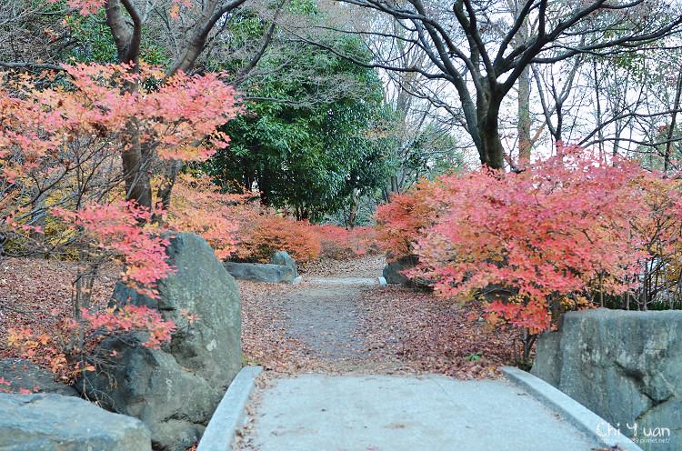 [日本。京都]梅小路公園。秋意正濃,輕飄雪