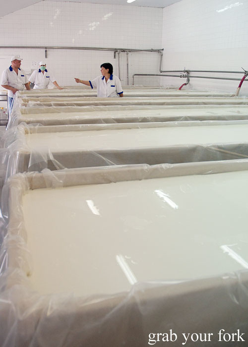troughs of milk at dairy factory, dalbok izvor, bulgaria