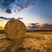 Bale of hay on the field and sunset