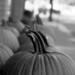 Pumpkin Waiting by mfophotos