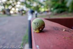 Da'ok Fruit