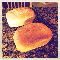 cute mini loaves