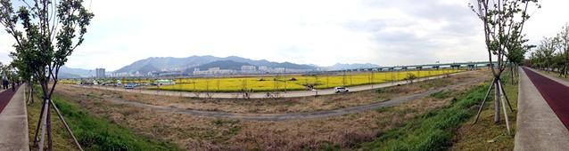 rapeseed festival busan korea