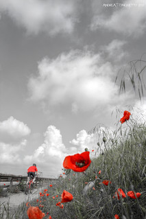 Red bike, red biker and of course red poppies! - DSC_1993_HDR_1