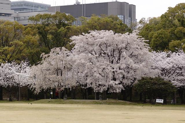 大阪城 おおさかじょう 西の丸庭園