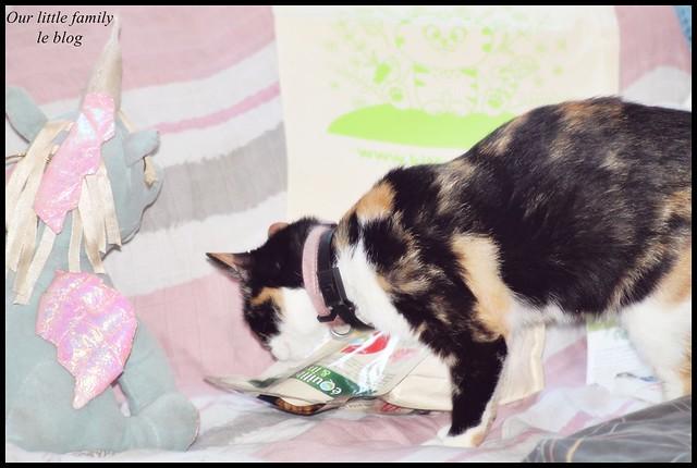lakittyboxchatcat16