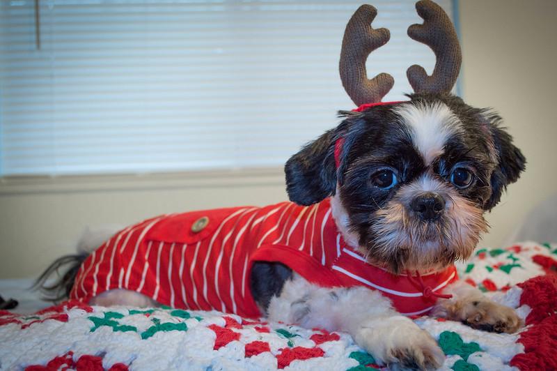 Reindeer Season