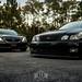 Lexus Gang