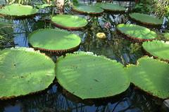 Conservatory - Brooklyn Botanic Garden New York