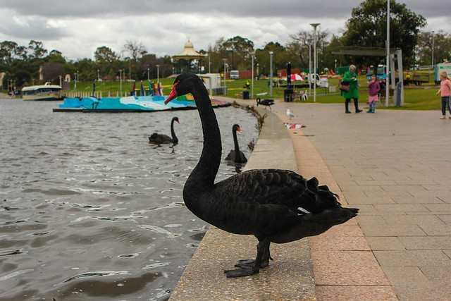 Adelaide6
