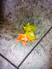 Not the First Leaf to Fall