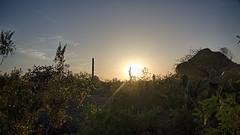 Desert Botanical Garden Sunset